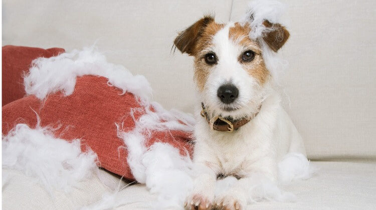 How To Stop Dogs From Chewing Furniture