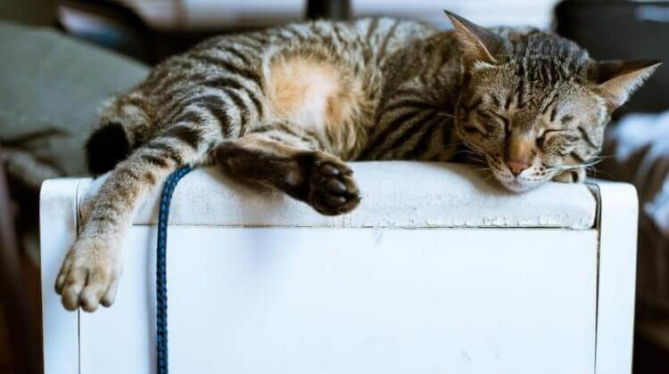 The 7 Best Furniture for Pets